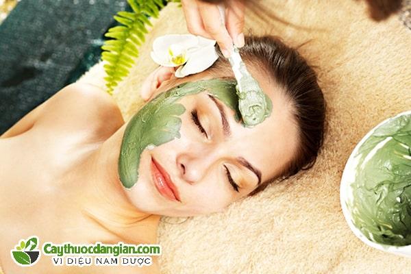 Những cách Đắp mặt nạ bằng lá tía tô chuẩn da đẹp hết mụn