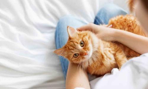 10 lợi ích bất ngờ khi nuôi chó mèo
