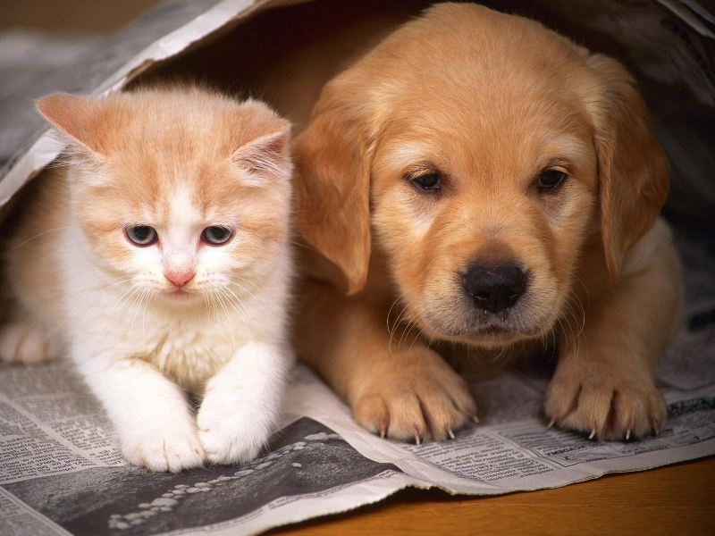 Cách phòng ngừa giun sán khi nuôi chó mèo?