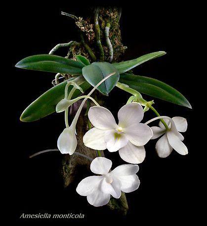 Làm sao để hoa lan nở quanh năm