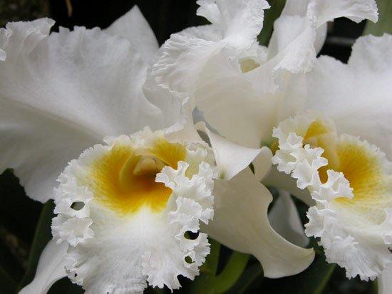 Một số kinh nghiệm trồng hoa lan